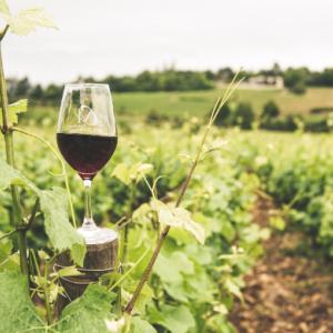 ワイン選びに失敗しない!世界プロ絶賛の高級クラスは価格が10分の1!