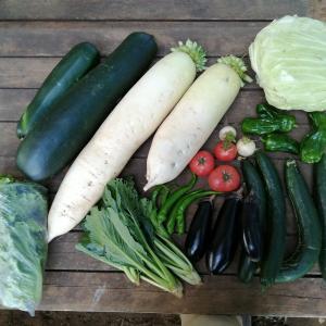 野菜が食べきれない…