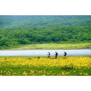 ニッコツキスゲ満開の雄国沼湿原お山歩