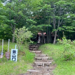 岩手山 〜コマクサの群落〜