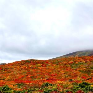 栗駒山 〜神の絨毯〜