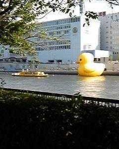 2020年8月、大阪天満橋にラバーダックが出現!水都大阪