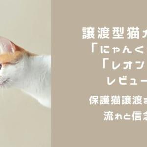 譲渡型猫カフェ「にゃんくる」「レオン」レビュー・保護猫譲渡までの流れと信念