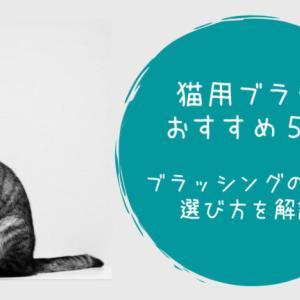 【猫用ブラシおすすめ5選】ブラッシングの頻度、選び方を解説!