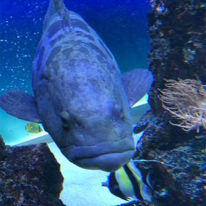 広島県にある水族館🐟マリーナホップ‼️