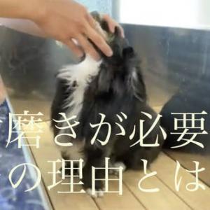 【さいたま市西区トリミング】犬に歯磨きが必要な理由はこれだ!