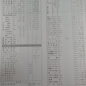 2020.10.29(木)膠原病内科受診(2)抗核抗体の検査結果