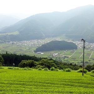 4月21日は『川根茶の日』|お茶処静岡が誇る日本三大銘茶・川根茶の魅力【食の雑学】【食の記念日食の雑学】