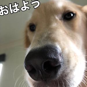 愛犬の愛が重い