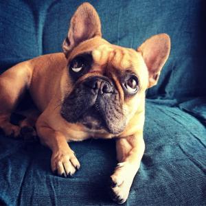 (犬も歩けば壁にぶつかる?)愛犬の小さなサインで白内障を早期発見