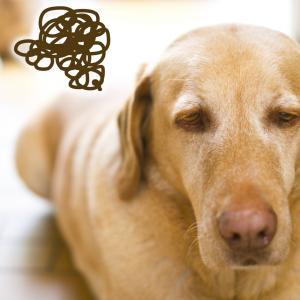 「老犬だけじゃない?!」愛犬の肥満が原因でも発症する軟骨の病気とは?