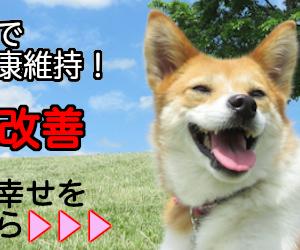 日本の天然記念物!とても賢く飼い主に従順で献身的な犬種「柴犬」