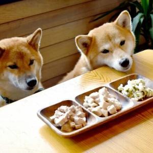 「ドッグフードを超える美味しさ」愛犬のための手作りご飯の食材や注意点
