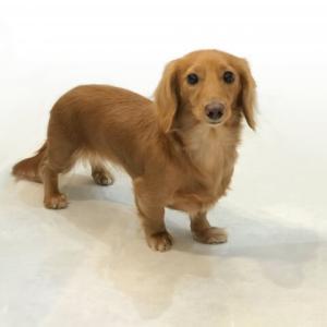 犬の椎間板ヘルニアの原因や予防を解説