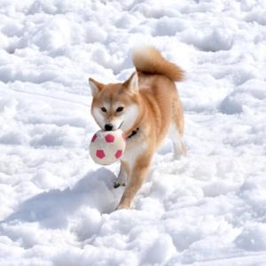 犬が冬の留守番に適した室温