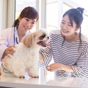【愛犬の咳が止まらない】「かはっ」という咳の原因となる病気と対処法