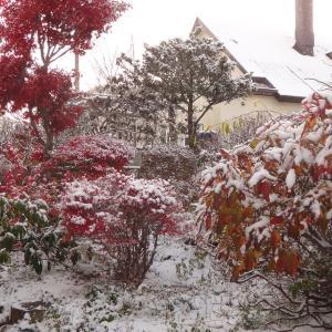 初の積雪 ・・・最高気温1.4度・最低気温マイナス3.5度!