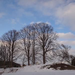 久々の散歩でリフレッシュ ・・・でも寒かった!
