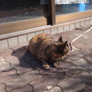 あの野良猫が ・・・チビタンが猛烈に威嚇!