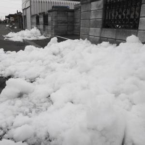 気温が上昇するとの予報で雪割をしたのだが!