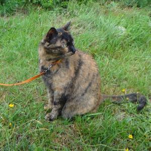 愛猫チビタンが9歳になりました!