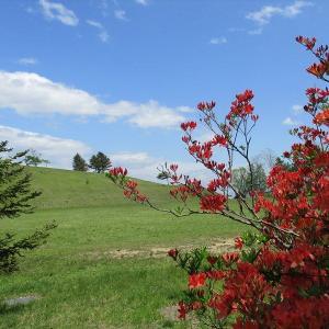 雑草だらけの庭 ・・・そんな中の花たちとサラサドウダン!