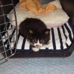 今日は愛猫マメタンの命日です ・・・亡くなってから2年!