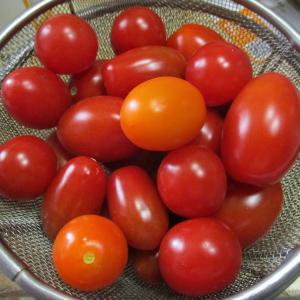 我が家の家庭菜園 ・・・気温の変化が激しくて!