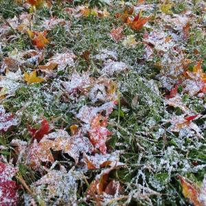 初雪と今季初の氷点下 ・・・北広島市は昨日が初雪でした‼