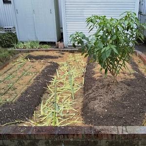 """耕さない""""自然菜園""""開始!"""