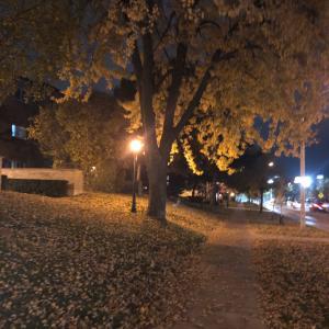 久々の夜の散歩とドライバーライセンス