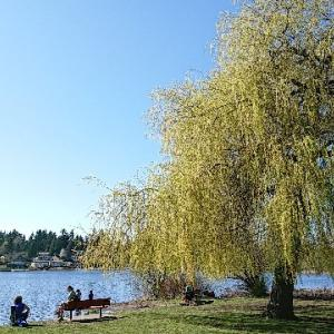Lake Ballinger Park(バリンガー・レイク・パーク)に行ってきた!