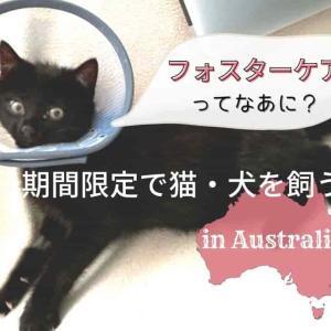 フォスターケアとは?オーストラリアで猫を期間限定でお世話しよう