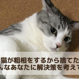 猫が粗相をするから捨てたい そんなあなたが病まないように解決策を考えてみた