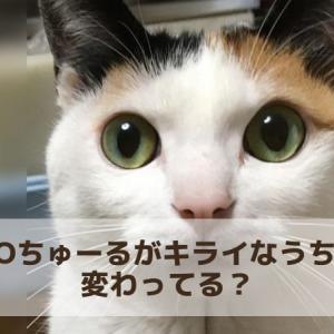 CIAOちゅ~るを食べないうちの猫 変わってる?ちゅーるに興奮しない原因とは
