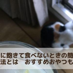 猫が餌に飽きて食べないときの簡単な対処方法とは そんな時に与えるおすすめおやつも紹介