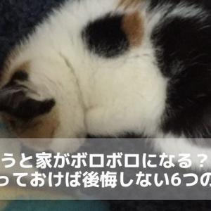 猫を飼うと家がボロボロになる?飼う前にやっておけば後悔しない6つの対策