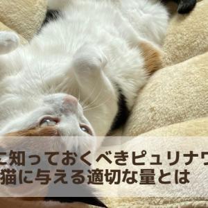 絶対に知っておくべきピュリナワンを猫に与える適切な量とは 簡単なカロリー計算方法も