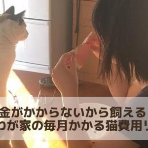 猫はお金がかからないから飼える。ビンボウなわが家の毎月かかる猫費用リアル