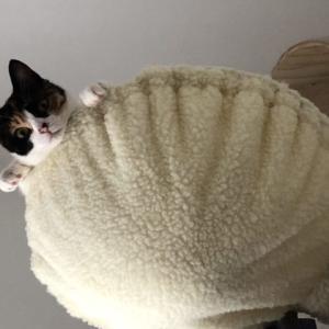 【猫グッズ】猫ちゃんの安心できる場所 キャットタワーを用意しよう