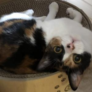 【猫グッズ】我が家で使用している猫壱グッズ