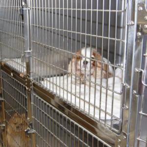 【香川・高知】チンチラの動物病院リスト|口コミのあった病院一覧
