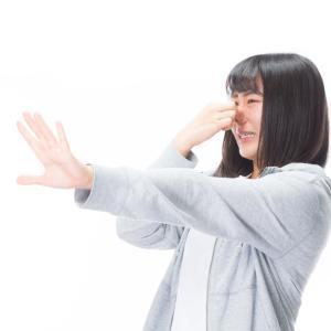 チンチラは臭い?体臭の特徴をご紹介!原因・対策方法はある?