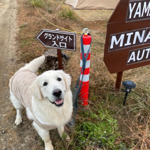 大型犬と行く!犬同伴可の山中湖みなみオートキャンプ場in山梨
