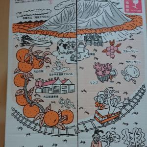 【ふるさと納税】鳥取県大山市から梨7.5キロが届きました