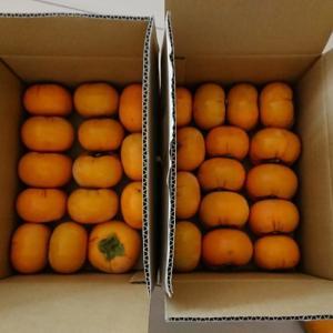 【ふるさと納税】和歌山県かつらぎ町から大量の柿が届きました!