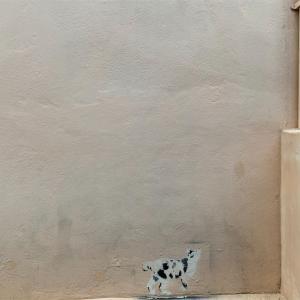 TALAT NOI vol.4_cat meets cat