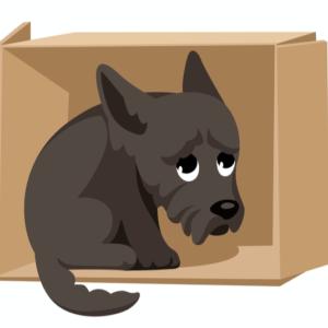 セブ島の野良犬の生き様と狂犬病【野生の目をしている!】