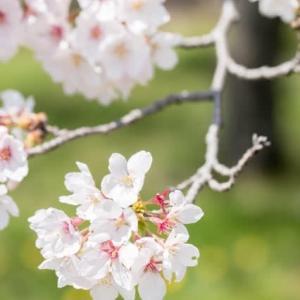 4月5日お花見