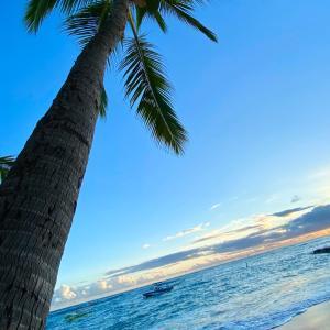 ハワイ路線の本格再開は9月以降になりそう